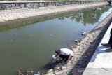 Kulon Progo uji laboratorium ikan mati di samping RSUD Wates