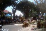 Angin kencang tumbangkan pohon pelindung, satu orang tewas tiga luka-luka