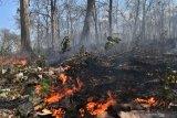 Pemprov Sulteng ajak masyarakat cegah kebakaran hutan dan lahan