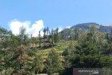 Jalur pendakian Merbabu  ditutup akibat kebakaran