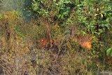 Warga Kabupaten Tulangbawang keluhkan dampak kebakaran hutan dan lahan