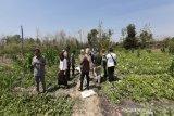 Petani Gunung Kidul memanfaatkan lahan tandus ditanami semangka
