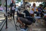 Petugas menggendong seekor anjing untuk ditimbang berat badan sebelum divaksin di Halaman Puskeswan, Leuwidahu, Kota Tasikmalaya, Jawa Barat, Jumat (13/9/2019). Dalam rangka menyambut Hari Rabies Sedunia pada 28 September, Dinas Pertanian dan Perikanan Kota Tasikmalaya mengadakan pemeriksaan kesehatan sekaligus vaksin rabies gratis bagi warga yang mempunyai hewan peliharaan kucing, anjing, dan kera dengan target 265 hewan. ANTARA JABAR/Adeng Bustomi/agr