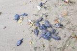 BMKG: Kematian ikan di Pantai Ambon bukan pertanda akan gempa dan tsunami