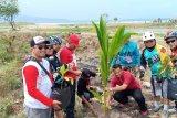 Goweser Lampung tanam pohon di Pantai Kedu Lampung Selatan