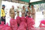 Bupati Bantul: perintah ASN beli bawang merah respons keluhan petani