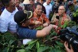 Gubernur Arinal menginginkan PTPN VII kembangkan komoditas kopi
