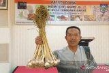 NTB mulai menerapkan pasar lelang komoditas agro sistem daring
