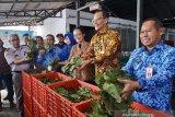 Pemerintah perluas negara tujuan ekspor daun gulinggang bahan dasar obat herbal