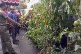 Pemkot Yogyakarta menyusun basis data ketahanan pangan