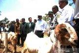 Bantuan hewan ternak