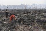 BNPB: 328.724 ha hutan-lahan terbakar selama Januari--Agustus