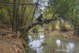 Warga memeriksa mesin pompa air yang dipasang dipohon nangka di aliran Sungai Cikidang, Desa Cipacing, Kabupaten Tasikmalaya, Jawa Barat, Kamis (19/9/2019). Akibat dilanda musim kemarau panjang sejumlah warga terpaksa memanfaatkan air sungai Cikidang untuk kebutuhan Mandi, Cuci, Kakus, meskipun air tersebut kotor. ANTARA FOTO/Adeng Bustomi/ agr
