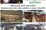 Ranch Sapi