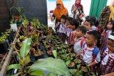 Pengembangan ekspor tanaman hias