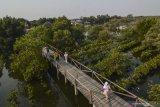 Pertamina terapkan inovasi waring lindungi mangrove dari minyak