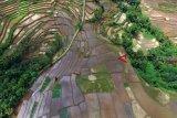 Guru Besar: Subsidi untuk pertanian organik kebutuhan penting
