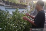 Kampung sayur organik Mojosongo targetkan mandiri pangan