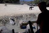 Pemprov diminta antisipasi penurunan populasi kerbau di Lore