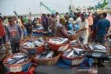 Nelayan membongkar hasil tangkapan ikan di Pelabuhan Perikanan Samudera Koetaradja, Desa Lampulo, Banda Aceh, Aceh, Selasa (24/9/2019). Badan Meteorologi, Klimatologi dan Geofisika (BMKG) dan Lembaga Adat Laut Aceh menghimau kepada para nelayan membatasi aktivitas melaut, khususnya bagi kapal nelayan yang tidak memiliki alat navigasi sehubungan kabut asap akibat kebakaran hutan daln lahan di wilayah Sumatera yang menyelimuti sejumlah perairan Aceh dan menganggu jarak pandang. Antara Aceh/Ampelsa.