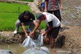 Inovasi-kreativitas optimalkan pemanfaatan lahan pertanian di Kota Magelang