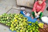Lampung mulai panen mangga
