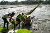 Realisasi luas tanam padi di Kulon Progo mencapai 841 hektare