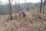 Balai TN Matalawa gencar sosialisasikan bahaya karhutla