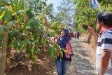 Video - Geliat ekonomi Desa Wisata Doesoen Kopi Sirap
