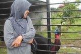 Gubernur jadwalkan buka workshop pelestarian burung liar di Makassar