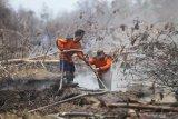 Kalteng merupakan provinsi dengan lahan terbakar terbesar