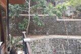 Pelestari satwa Gunung Kidul menyediakan minum untuk monyet ekor panjang