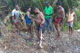 Warga tangkap buaya endemik Danau Sentani