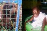 Induk dan bayi orangutan diselamatkan dari lokasi kebakaran lahan