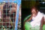 Kisah penyelamatan induk dan bayi orangutan korban kebakaran hutan di Kalimantan Tengah