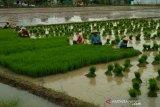 Ketersediaan air Waduk Kedung Ombo mengkhawatirkan