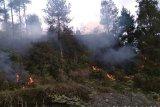 Hutan lereng Gunung Merapi terbakar
