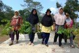 Agam Tanam 1.000 pohon Mahoni antisipasi longsor