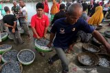 Warga membawa ikan teri tangkapan nelayan tradisional palong (Bagan) yang dilelang di Pelabuhan Pendaratan Ikan (PPI) Krueng Raya, Aceh Besar, Aceh, Minggu (6/10/2019). Ikan teri hasil tangkapan nelayan tradisional bagan dijual antara Rp50.000 hingga Rp1.200.000 per keranjang tergantung jenis. Antara Aceh/Irwansyah Putra.