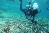 900 fragmen karang ditanam pulihkan ekosistem di Pulau Bunaken