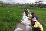 NTB menolak program mina padi akibat kekeringan ekstrem
