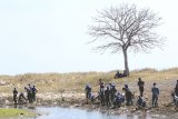 Prajurit TNI AL bersama Forkopimda, Siswa dan Masyarakat menanam mangrove di pesisir Pulau Santen, Banyuwangi, Jawa Timur, Senin (7/10/2019). Penanaman 7.000 bibit mangrove dalam rangka HUT TNI ke-74 tersebut, diharapkan dapat bermanfaat bagi kelestarian lingkungan. Antara Jatim/Budi Candra Setya/zk.