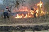 Petugas padamkan api bakar  lahan TNWK