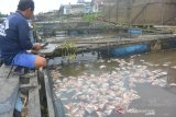 DPRD Banjarmasin pertanyakan kematian puluhan ton ikan tambak