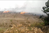 Polisi selidiki kebakaran lahan gambut  di Mesuji