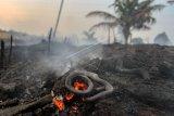 Seekor ular ditemukan mati di area perkebunan nanas milik warga yang terbakar akibat kebakaran lahan gambut yang meluas di Pekanbaru, Riau, Senin (7/10/2019). Kencangnya angin di lokasi lahan yang terbakar membuat api dengan cepat meluas sehingga petugas kesulitan untuk memadamkan kebakaran di kawasan tersebut. ANTARA FOTO/Rony Muharrman/wsj.