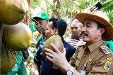 Masyarakat Kabupaten Pati didorong tekuni budi daya kelapa kopyor