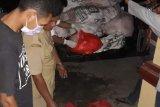 Ratusan kilogram ayam tak layak konsumsi dikembalikan ke Bima