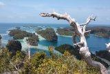 Pencarian wisman asal Swiss yang hilang di hutan Papua dihentikan sementara