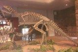 Di China, bekas jejak kaki sekelompok dinosaurus 100 juta tahun ditemukan lagi
